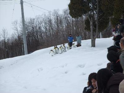 2011_0308北海道ツアー0036.JPG
